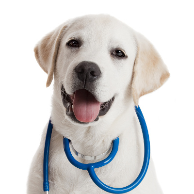 aliterme-veterinaria-prodotti