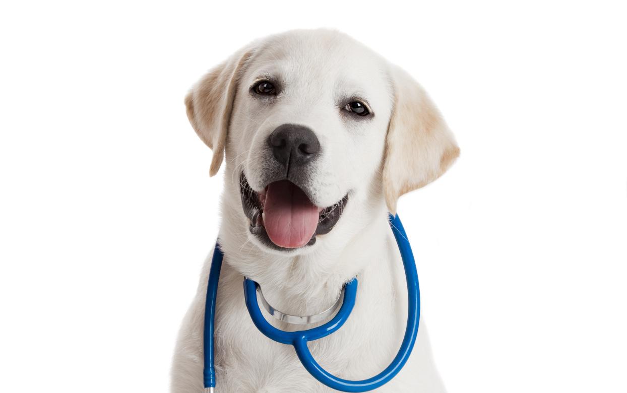 aliterme-veterinaria